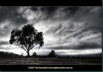 Tree-and-storm-clouds_MG_2436