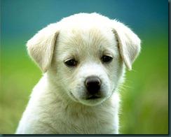 Poor-Puppy-1-1152x864