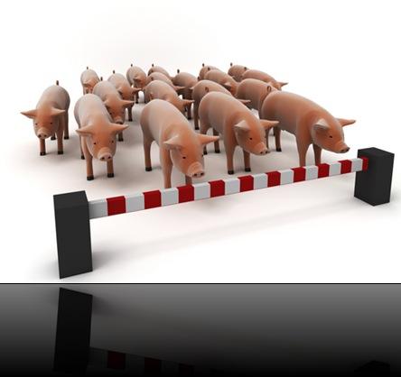 swine-flhu
