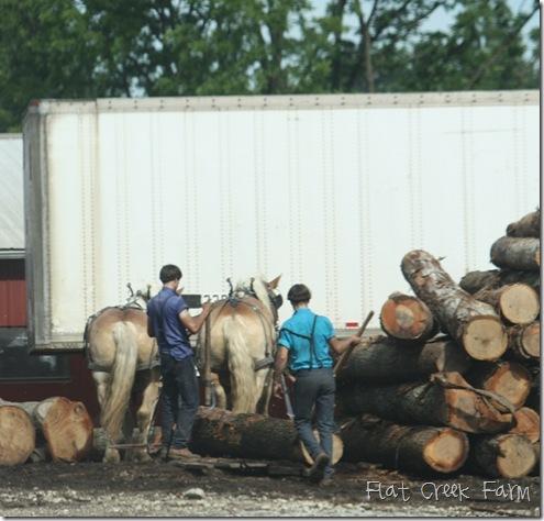 log_horse