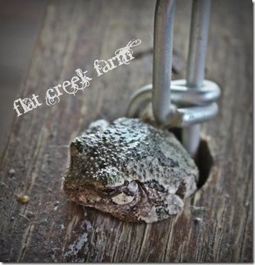 treefrog1