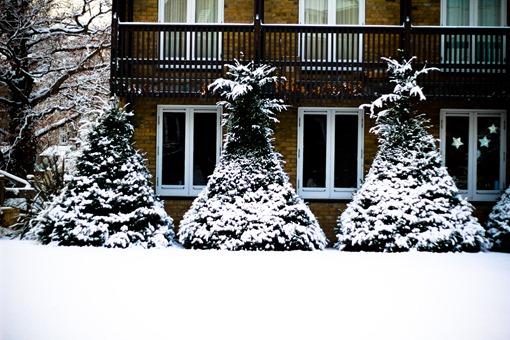 Cambridge Snow-145