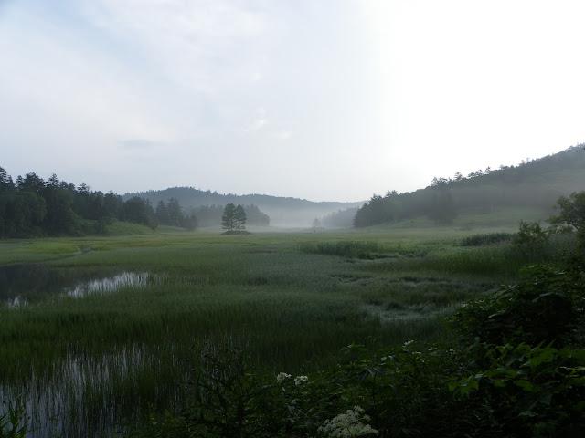 朝靄の中の湿原