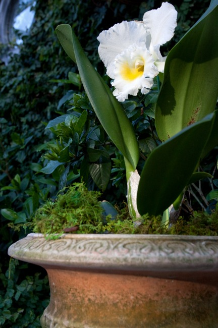 Orchid-in-Campo-Pot