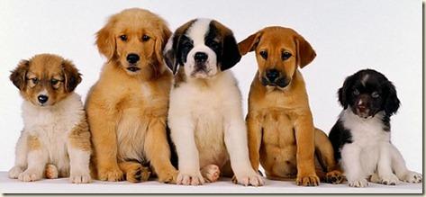 pre-adiestramiento-cachorros