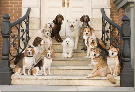 adiestradores-perros-1-6