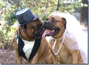 cani sposi