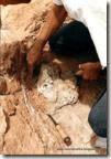 escavando cranio Mariliasuchus-1998