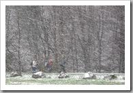 Hóban, sárban... - Apátkúti-völgy, 2008
