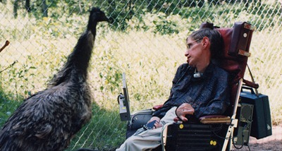 hawking-with-emu
