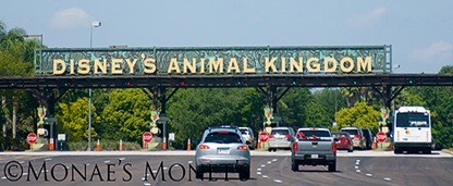 Animal Kingdom sign
