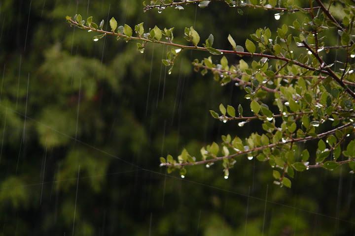 comment photographier la pluie P1090505
