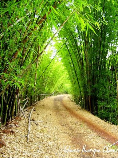 Araguari, a bela do Triângulo Mineiro AAED8N