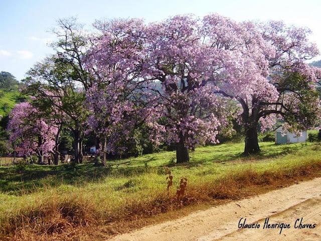 Araguari, a bela do Triângulo Mineiro MKg