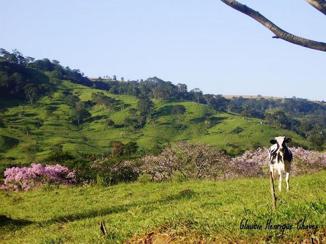 Araguari, a bela do Triângulo Mineiro WFQBJ