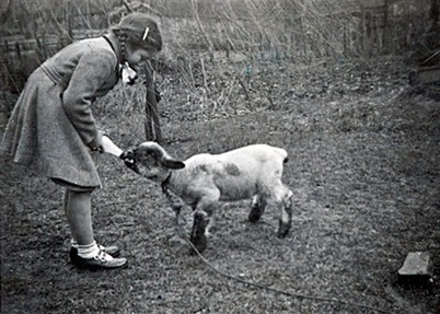 Kath  lamb 3b - 7x5 Shad15
