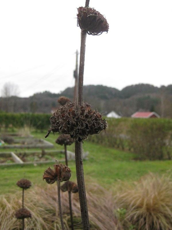 2008-12-23 Hagen (13)