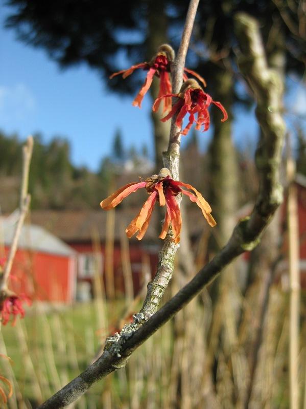 2009-03-08 Hagen i mars (10)