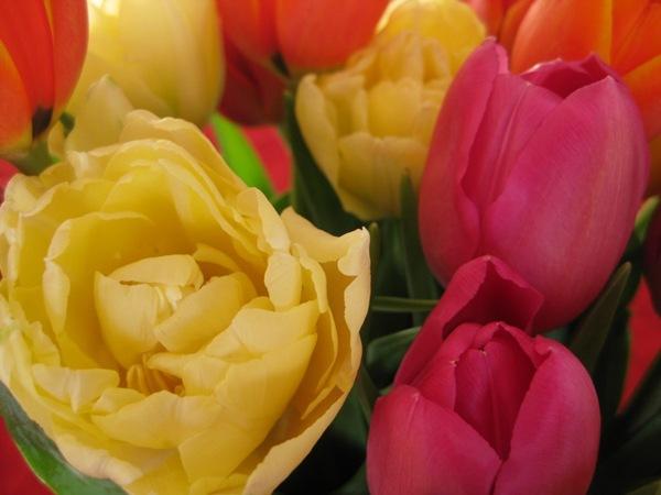 2009-03-11 Blomster i leiligheten (36)