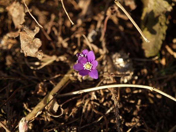 2009-03-21 Mars (152)