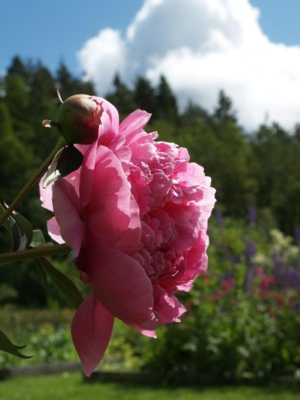 2009-06-18 Hagen (13)