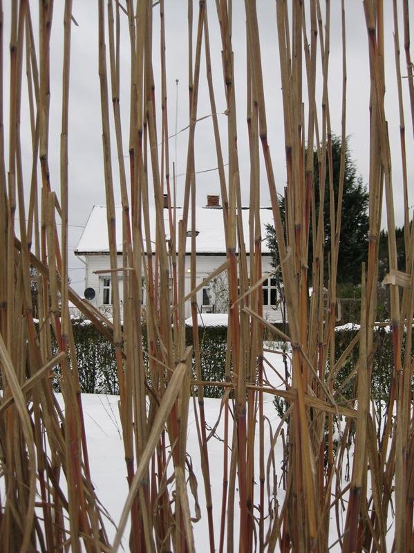 2009-12-25 Hagen (23)