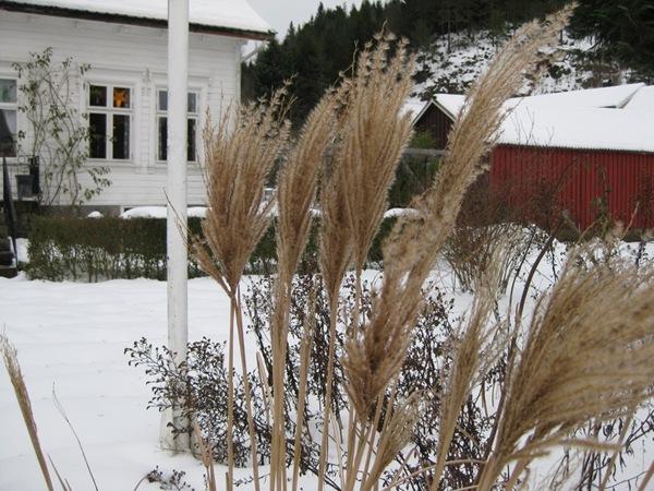 2009-12-25 Hagen (14)