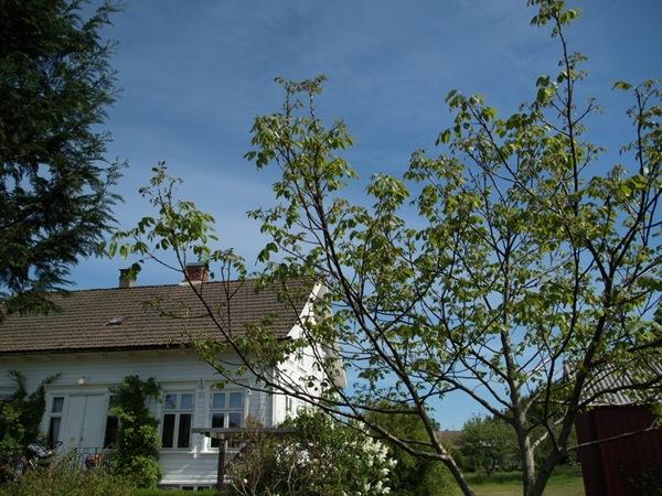 2010-06-06 Hagen i juni (95)