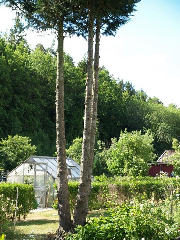 2010-06-30 Hagen (197)