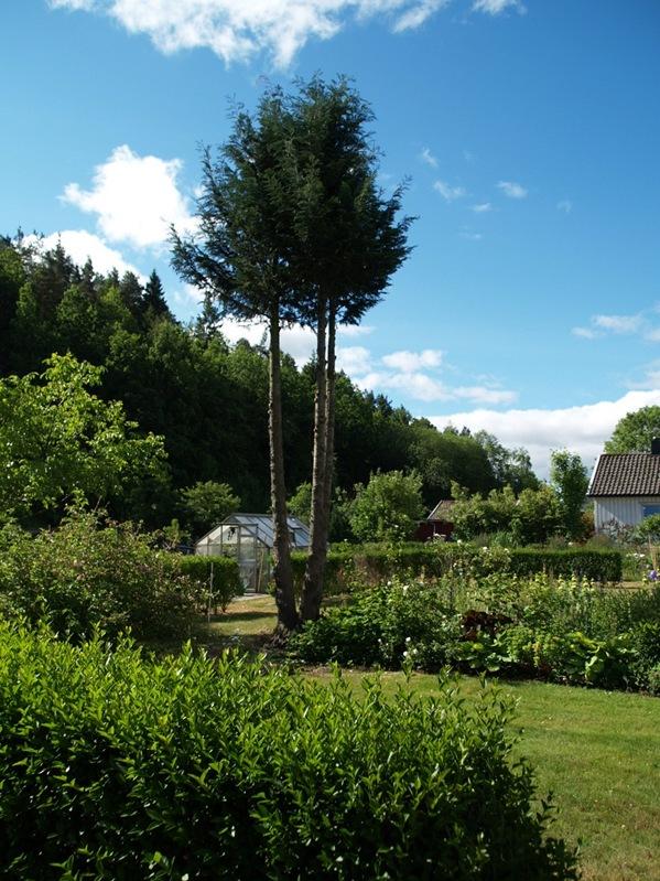 2010-06-30 Hagen (196)