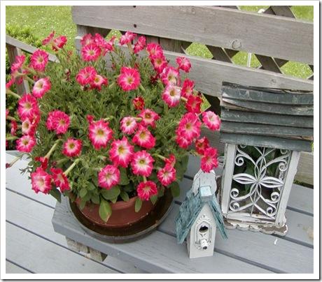 2009_deck_flowers_003