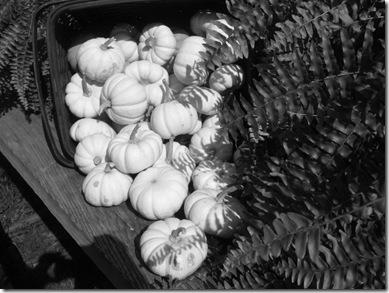 pics 189906