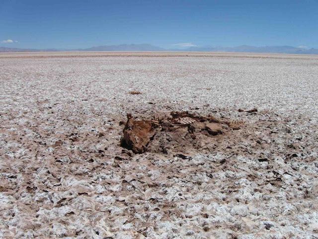 LEJARRETA EN LOS ANDES (2009) 26%2Cvaca