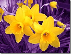 yellowpurple