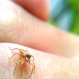 Jumping Spider on My Hand by Dheny Prasetia - Instagram & Mobile Android