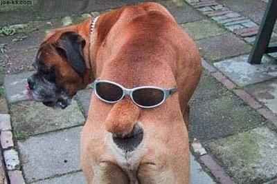 Un cane molto curioso