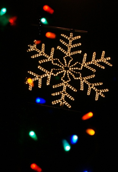 Family Affair Photography Christmas lights