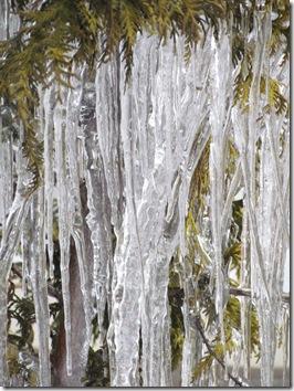winter 2010 047