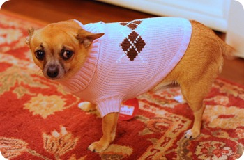 Chelsea's Sweater