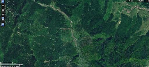 defrisari romania imagini copaci taiati