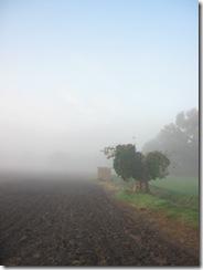 Brouillard le thor 2