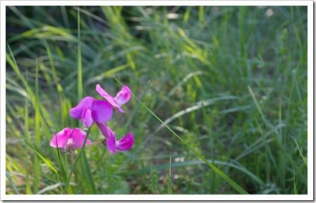 Fleur de bord de route