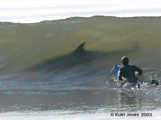 shark_wave.jpg