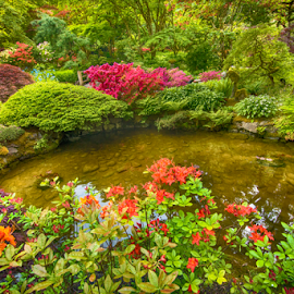 Beautiful pond surrounded by plants by Kathy Dee - Nature Up Close Gardens & Produce ( reflection, canada, blooming, green, butchard, botanical., red, nature, trees, victoria, pink, flowers, pond, garden, british columbia, lants )