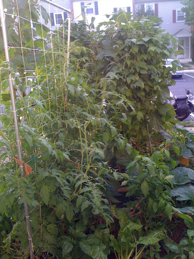 Trellis on more than one side Photo%205-709046