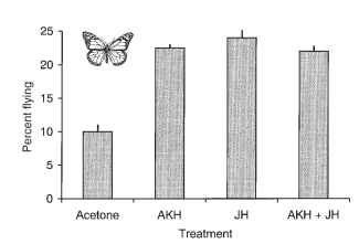 Influence of JH and AKH on tethered flight in the monarch butterfly. Flight (%) longer than 30min is the index of migratory flight. The butterflies received topical application of hormones or the acetone control, and subsequent flight duration was determined. Both hormones, singly or together, increased flight over controls.