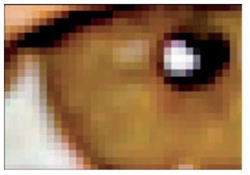 Pixels are the building blocks of digital photos.