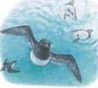 Water wings...