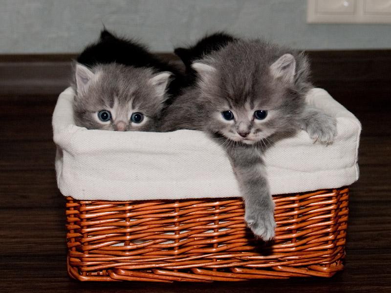 Возьму кота киев