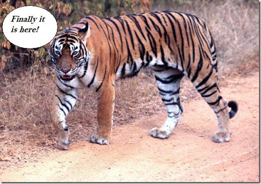 IN03_TIGER-RATHAMBORE_6485f